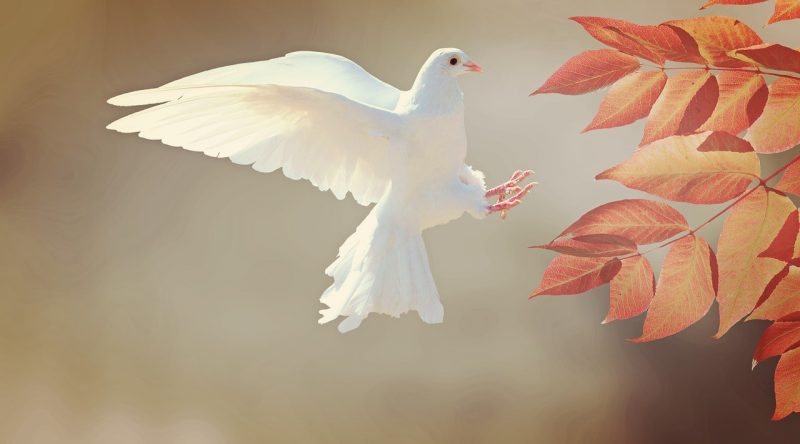 Бял гълъб