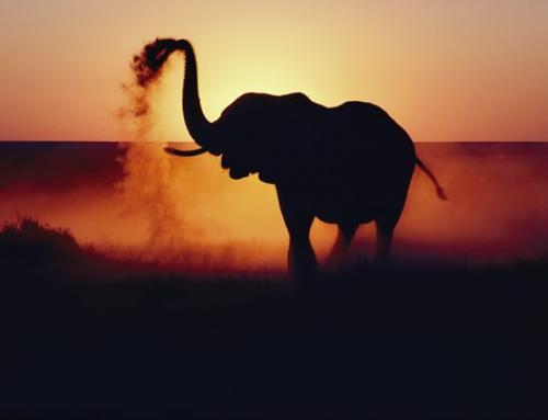 Как Слонът погаси гнева си